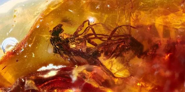 41 milyon yıl öncesine ait, kehribara hapsolmuş böcekler keşfedildi