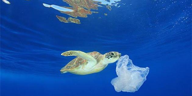 Deniz Kirliliği ve Mikroplastiklerin Ciddiyetini Ortaya Koyan Korkunç Ölüm