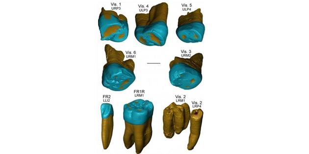 450 bin yıllık fosil dişler, Neandertal insanının evrimi hakkında ipuçları sunuyor