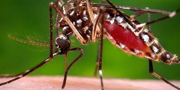 Sivrisinek ısırdı, iki bacağı ve kolu kesildi