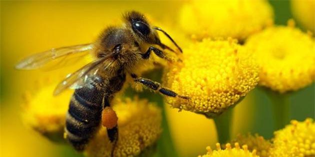 Arılar matematik konusunda dahi!