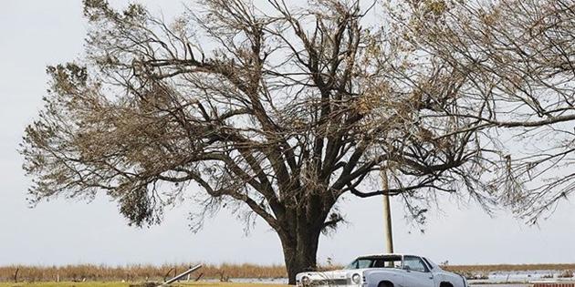 Çabuk büyüyen ağaçlar erken ölüyor