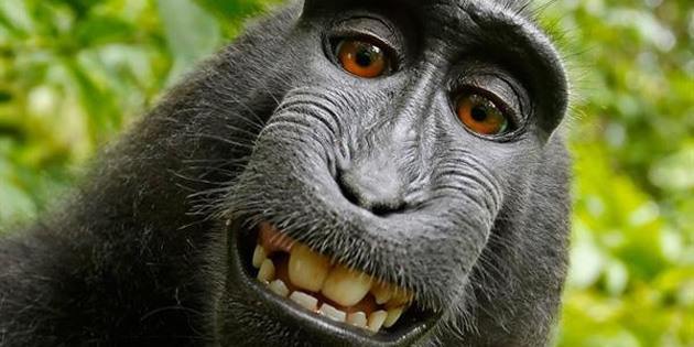 'Maymun selfie'si davası' sonuçlandı!