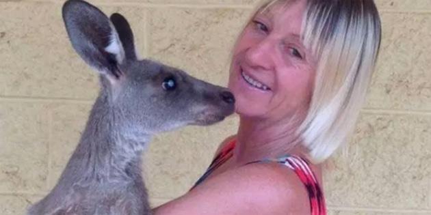 Avustralya'da bir aile 2 metrelik kangurunun saldırısında yaralandı