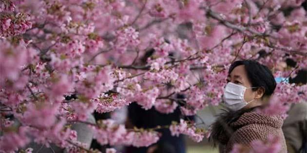 Tokyo'da kiraz çiçekleri hiç olmadığı kadar erken açıldı