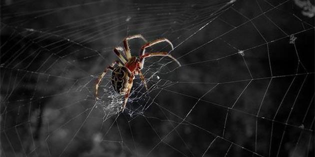 Çin'de Doktora Giden Bir Kişinin Kulağından Örümcek Çıktı