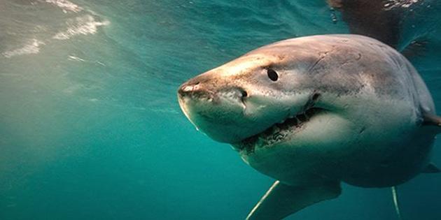 Avustralya'da köpek balığı saldırısında bir sörfçü yaralandı