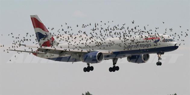Uçağın motoruna kuş kaçarsa ne olur?