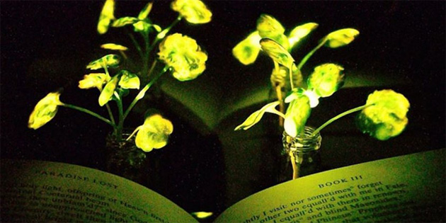 ABD'li bilim insanlarından parlayan bitki!