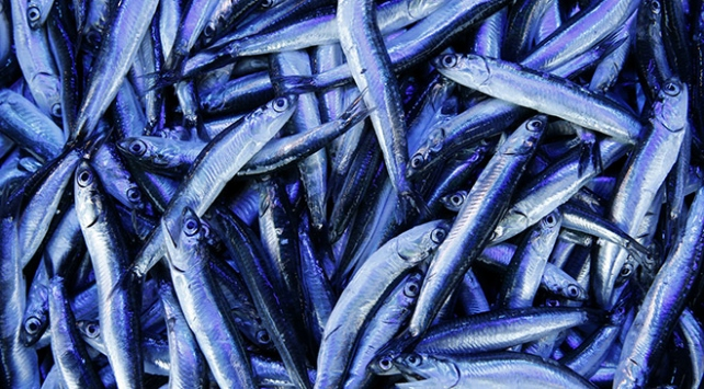 Vatandaşlar en çok hangi balığı tercih ediyor?