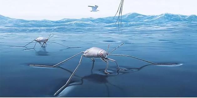 Deniz böcekleri gemi kaplamalarına ilham kaynağı olabilir