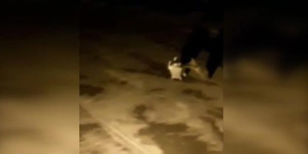Aç kalan yavru ayı çöp konteynerini götürdü - VİDEO