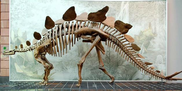 Fırtına sayesinde 130 milyon yıllık dinozor ayak izi ortaya çıktı