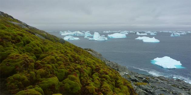 'Antarktika'da buzlar eridikçe toprak yeşilleniyor!'