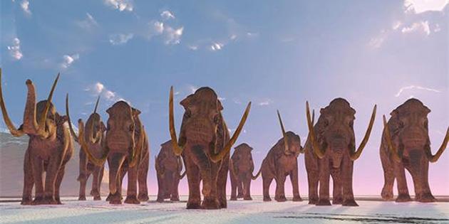 Mamutların Buz Devrinden Kalma Ayak İzleri Ortaya Çıkarıldı