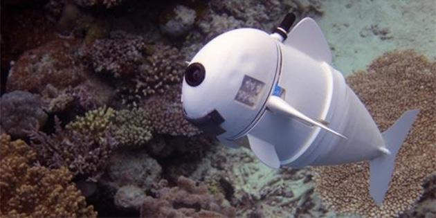 MIT'nin biyonik balığı SoFi ile tanışın