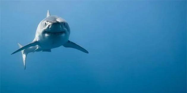 Bir Sörfçü, Köpek Balığı Saldırısından Yumruk Atarak ve Küfür Ederek Kurtuldu