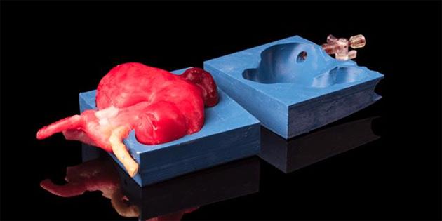 Cerrahlar üç boyutlu organ baskıları üzerinde pratik yapıyor