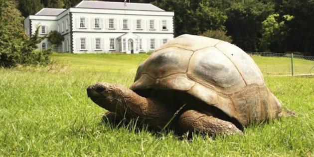 En yaşlı kaplumbağanın eşcinsel olduğu öğrenildi