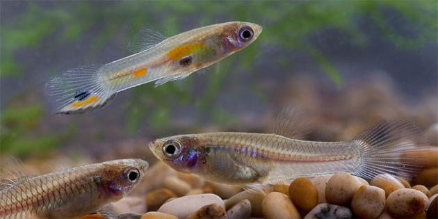 Balıkların karmaşık bir kişiliğe sahip oldukları keşfedildi!