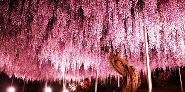 Ağacı görenler hayran kalıyor !