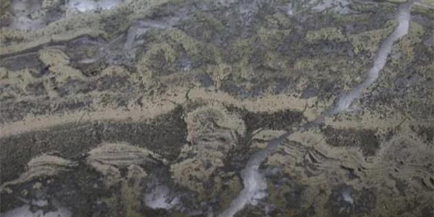 En eski mikrop örnekleri bulundu