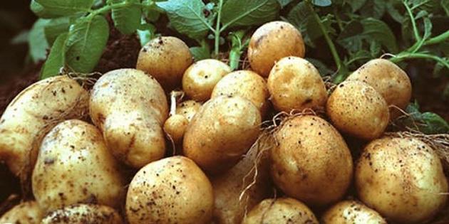 """""""KKTC'den Güney'e patates geçişinin yasal olduğu"""" vurgulandı"""