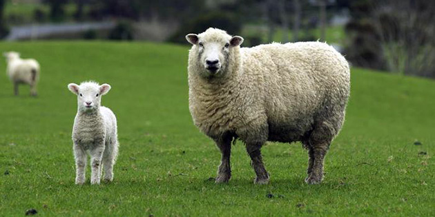 Devlet Üretme Çiftliği ihaleyle hayvan satışı yapacak