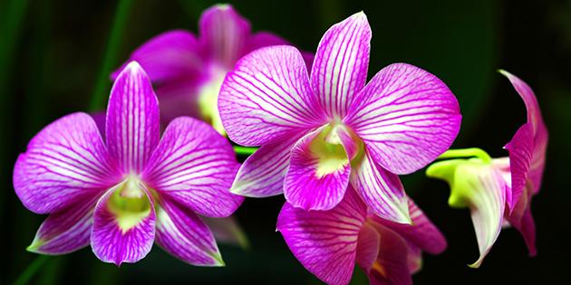 Orkide yürüyüşü 4 Mart'ta