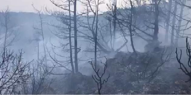 Kantara bölgesindeki yangın kontrol altına alındı