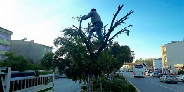 Ağaç budaması nedeniyle elektrik kesik olacak