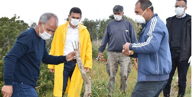 Tarım Bakanı Oğuz, yabani zeytinlerle ilgili yürütülen pilot çalışmayı inceledi