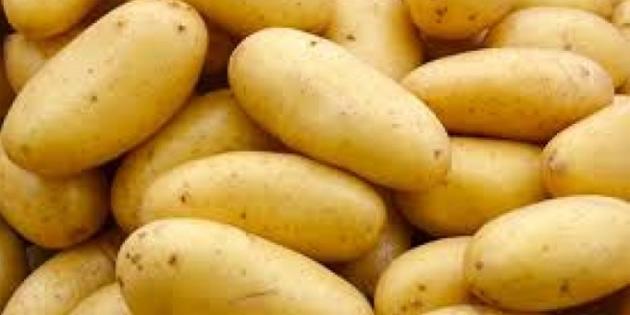 İlkbahar patates ekimi yapılan araziler Genel Tarım Sigortası Fonu'na beyan edilmeli