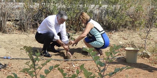Harup fidanını Cumhurbaşkanlığı bahçesine dikti
