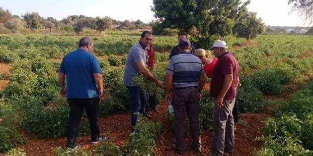Tarım Dairesi eğitim çalışmalarına Serdarlı ile devam edecek