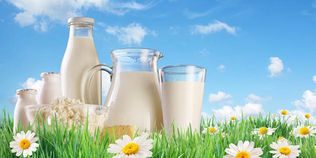 20 bin öğrenciye süt dağıtılacak