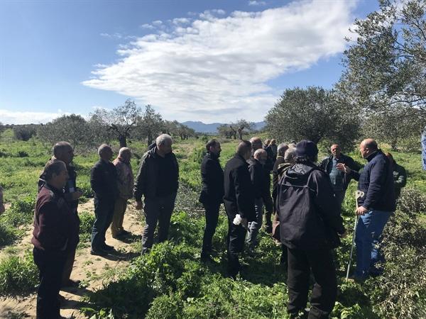 Büyükkonuk Zeytin Koop üyelerine zeytin ağacı bakımı ÜZERİNE eğitim verildi