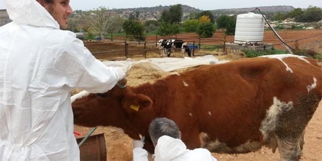 Veteriner Dairesi'nden hastalıklarla mücadeleye hassasiyet göstermeyen üreticilere tedbir uygulama kararı