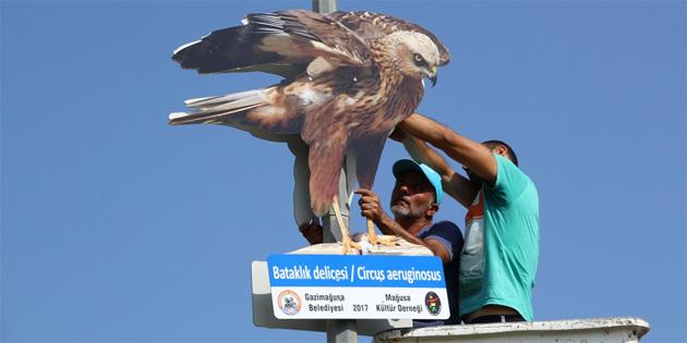 Kıbrıs'a özgü kuşların fotoğrafları asıldı