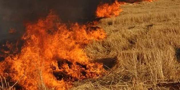 Arazi yangınında 150 dönüm arpa yandı