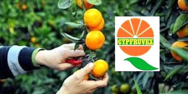 """Cypfruvex: """"Sıkmada kullanılacak Valensiya ürünler, 31 Mayıs'a kadar Cypfruvex Meysan'a ulaştırmalı"""""""