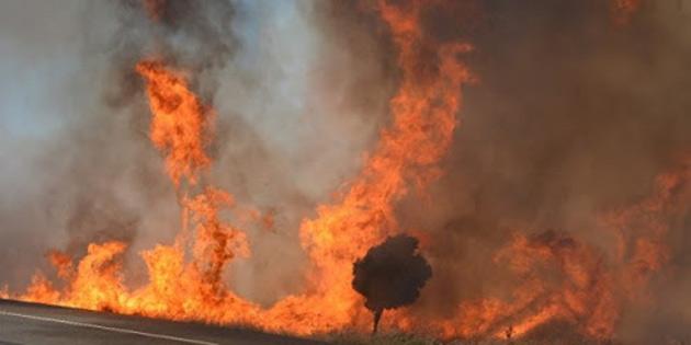 10 dönümlük alandaki zeytin ağaçları ve makiler yandı