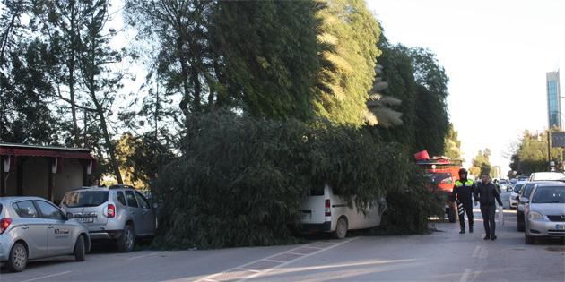 Lefkoşa'da ağaç fırtınadan dolayı kökünden sökülüp bir aracın üstüne düştü