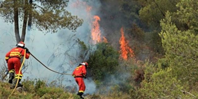 Çevre örgütleri, yangınlarda yönetsel zaafiyetlerin en büyük paya sahip olduğunu savundu