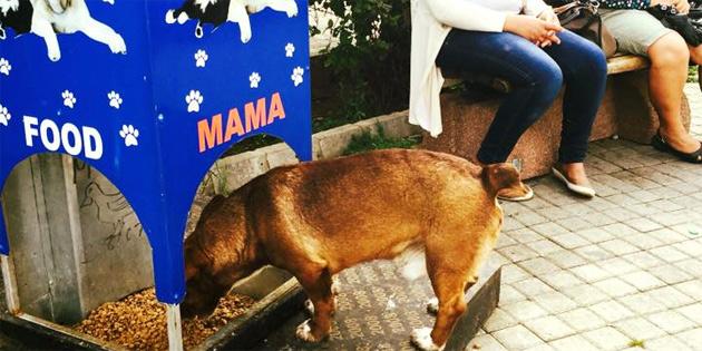 Sokak Hayvanlarına su ve mama bırakılması için çağrı