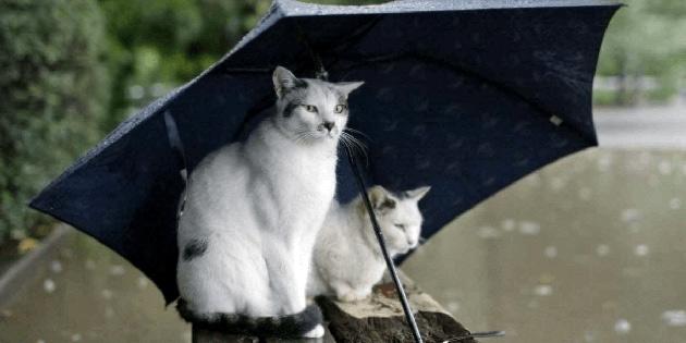 Hava yarından itibaren yağmurlu