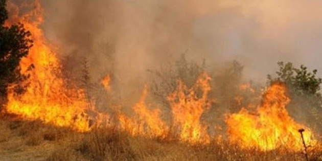 Yeniboğaziçi'nde arazi yangını