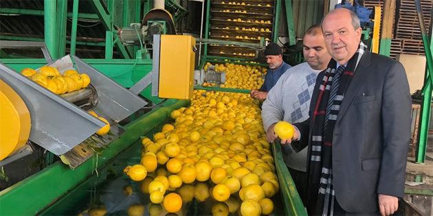 Tatar Güzelyurt'ta temas ve incelemelerde bulundu
